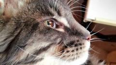 Отзыв от Anmadi_ma: Зубная паста для Кошек